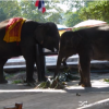 Elephants In Ayutthaya Thailand