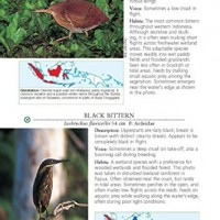 A-Photographic-Guide-to-the-Birds-of-Indonesia-Second-Edition-0-1