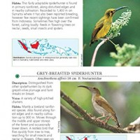 A-Photographic-Guide-to-the-Birds-of-Indonesia-Second-Edition-0-3