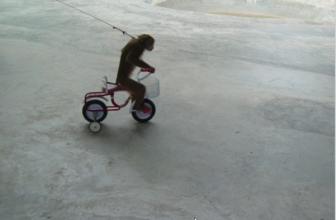 Monkeys In Chiang Mai Thailand